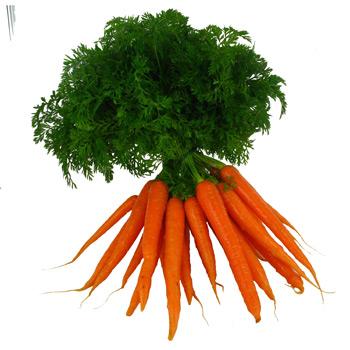 carottes fanes jardins de vartan