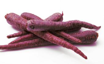 carotte-pourpre-jardins-de-vartan