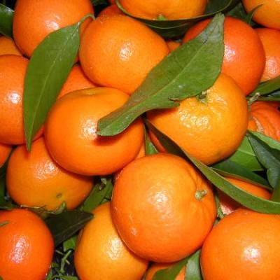 clementine-nice-jardins-de-vartan