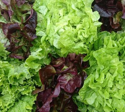 mix-salades2-640x360