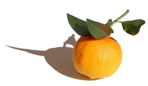 citron volkameriana