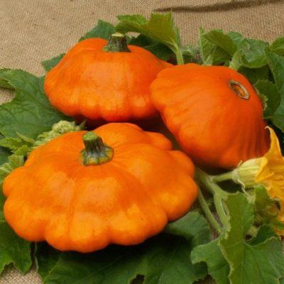 patisson-orange